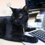 Shadow, a black cat, with paw on laptop
