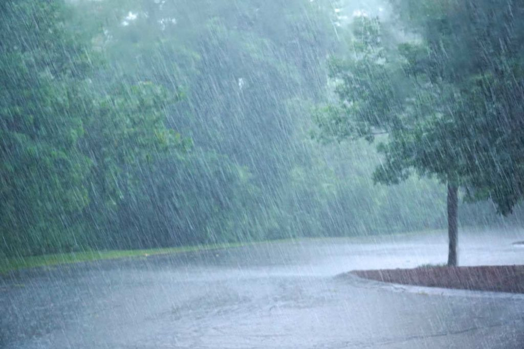 heavy rain and tree in a parking lot/street