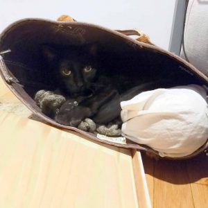 Black cat hiding in a tote bag that's tipped over on the floor. His front paws are resting on a knitting scarf.